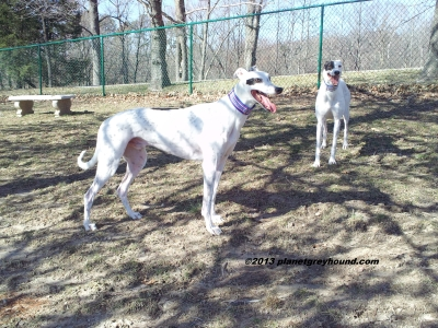 planetgreyhound088
