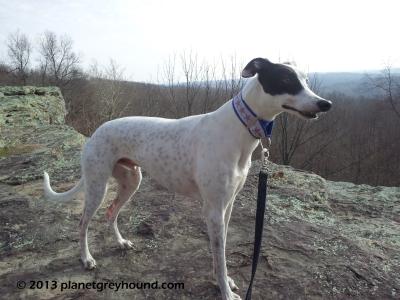 planetgreyhoundbluff2