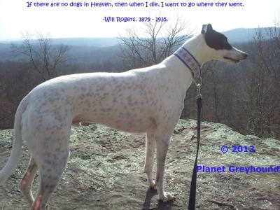 planetgreyhoundbluff4