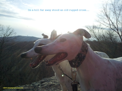 planetgreyhoundcross