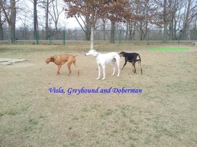 planetgreyhoundpark3
