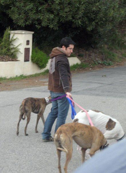 reznorandhounds
